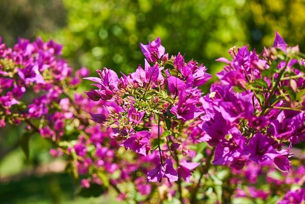 Beautiful Spring Flowers With Purple Leaves Premium Photo
