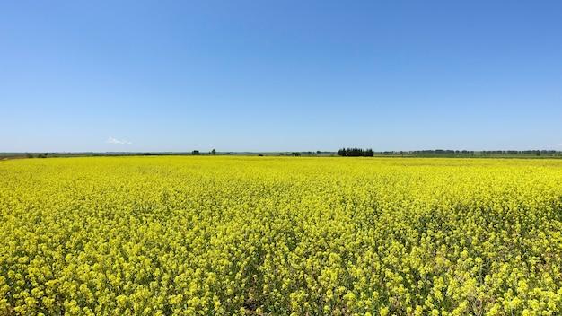 Bellissimo paesaggio primaverile con un campo giallo brillante di fiori di colza Foto Gratuite