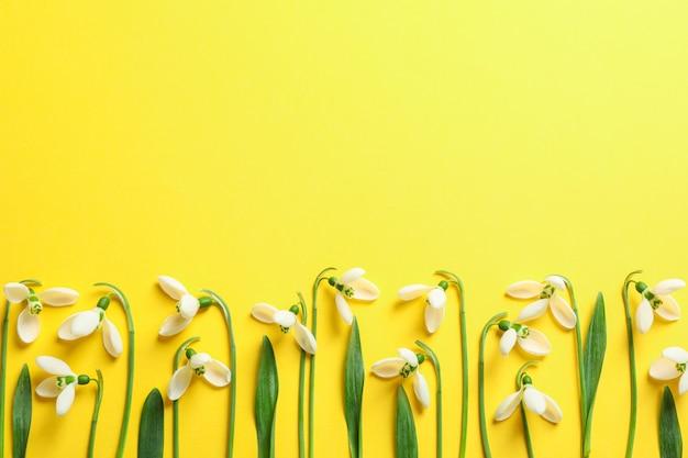 色背景、テキスト用のスペースに美しい春スノードロップの花 Premium写真