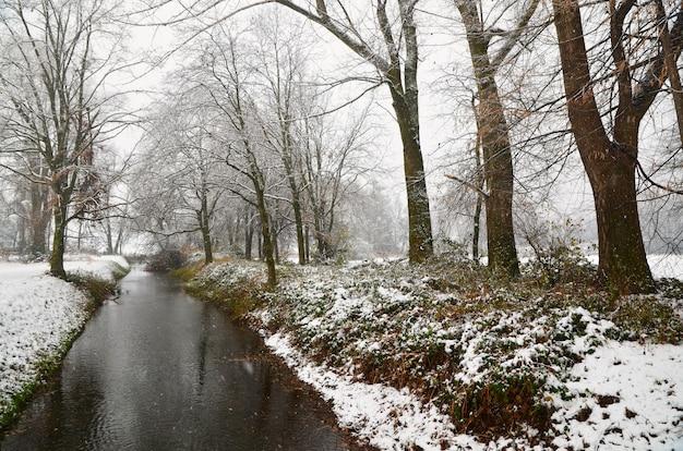 雪に覆われた芝生の海岸と木々を流れる美しい小川 無料写真