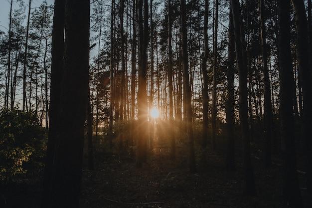 Красивый восход солнца в осеннем лесу Premium Фотографии