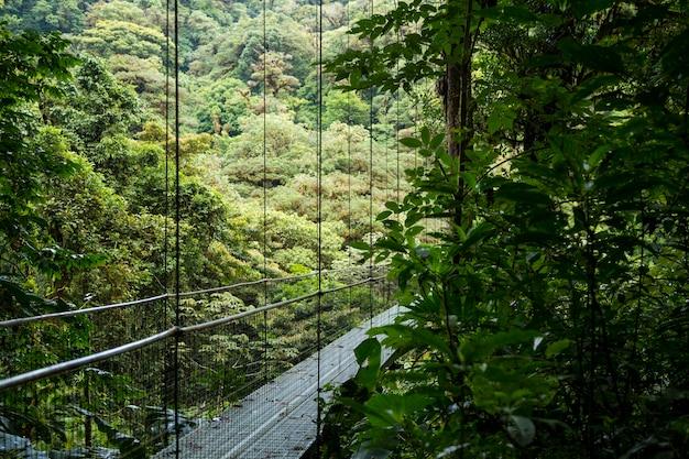 Beautiful suspension bridge in rainforest at costa rica Free Photo
