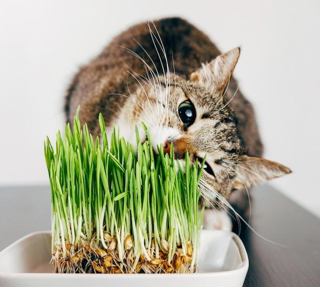 Afbeeldingsresultaat voor catnip freepik
