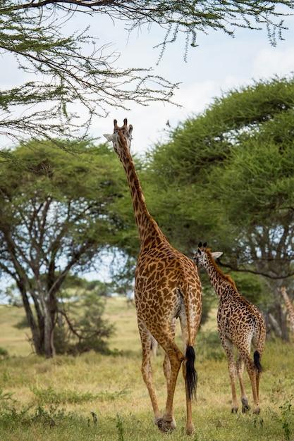 Beautiful tanzania Premium Photo