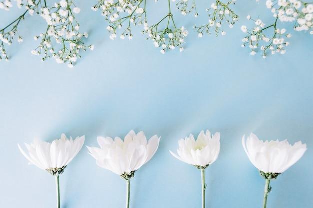 Beautifultender flowers on blue Free Photo