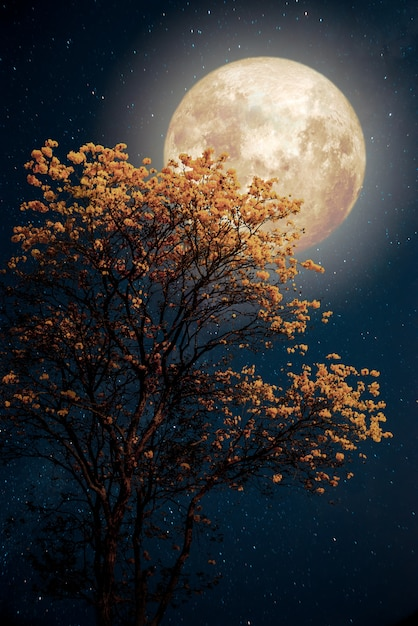 Beautiful tree yellow flower blossom with milky way star in night skies full moon - retro fantasy style artwork with vintage color tone. Premium Photo