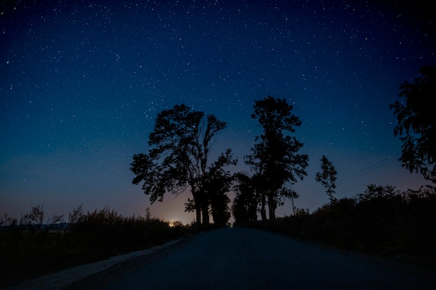 Beautiful trees in the middle of the road at night Free Photo