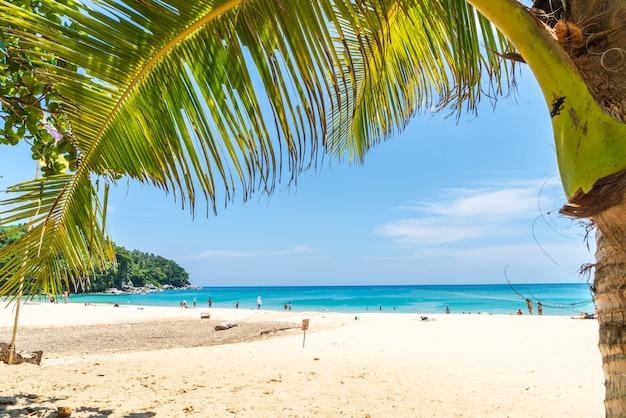 美しい熱帯のビーチと海の楽園の島のココヤシの木 Premium写真