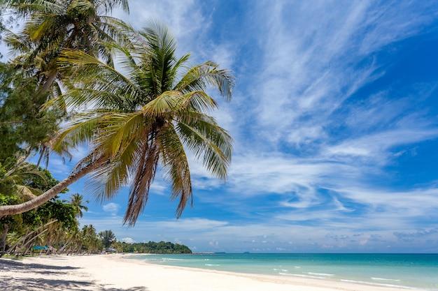 Beautiful tropical beach sea and ocean with coconut palm tree Premium Photo
