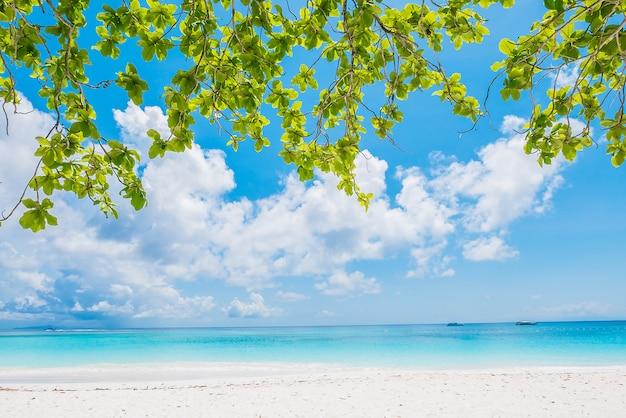 Beautiful tropical beach Free Photo