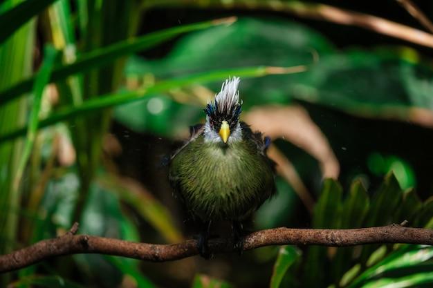公園で白い頭を持つ美しい熱帯の鳥 Premium写真