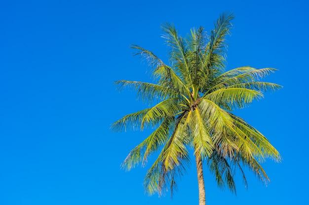 Bella palma da cocco tropicale con cielo blu e nuvole bianche Foto Gratuite