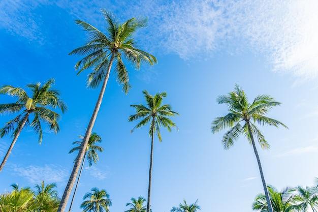 자연 배경 푸른 하늘 주위에 흰 구름과 아름 다운 열 대 코코넛 야자수 무료 사진