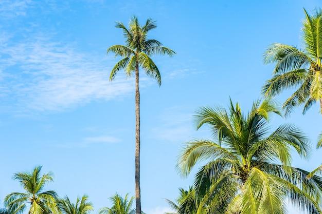 自然の背景のための青い空の周りの白い雲と美しい熱帯のココヤシの木 無料写真