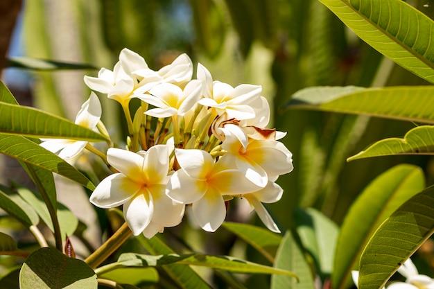 Beautiful tropical flowers Free Photo