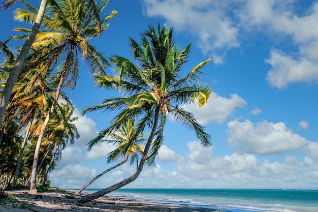 Bellissimo paesaggio tropicale di alberi di cocco lungo la riva sotto un cielo blu nuvoloso Foto Gratuite