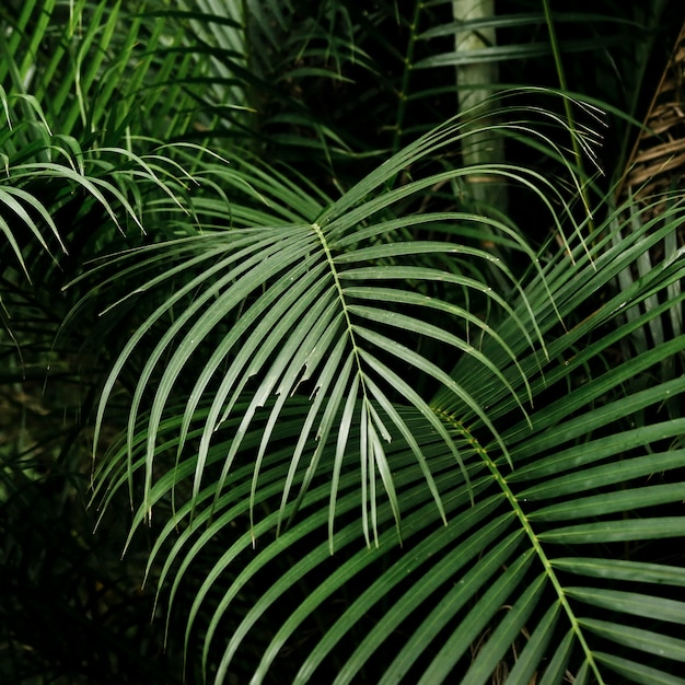 Free Photo Beautiful Tropical Leaves In The Forest Tropical forests are forested landscapes in tropical regions: beautiful tropical leaves in the forest