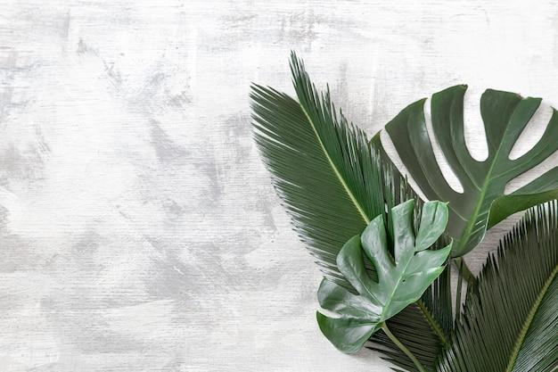 흰색 배경에 아름 다운 열 대 잎. 포스터 배너, 엽서 템플릿입니다. 무료 사진