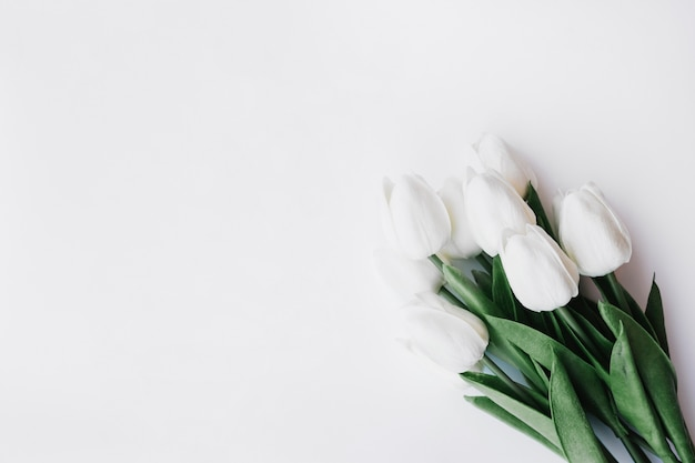 Beautiful Tulips Bouquet On White Background Photo Free