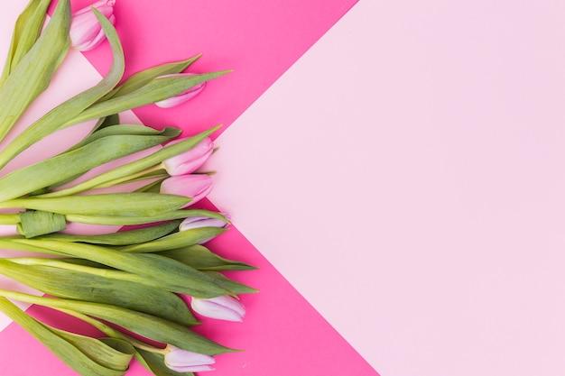 Beautiful tulips on pink background Free Photo