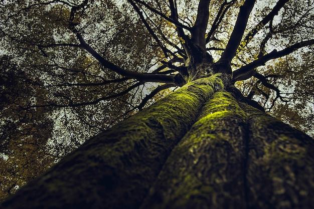 Bellissimo risultato di un vecchio albero alto e spesso che cresce in una foresta Foto Gratuite
