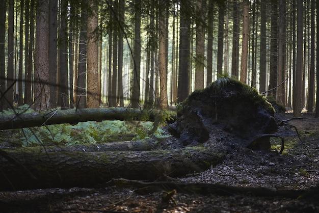 Bella vista di alberi spezzati coperti di fango e muschio in mezzo alla foresta Foto Gratuite