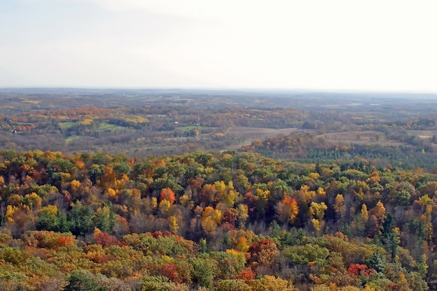 Bella vista della foresta decidua Foto Gratuite