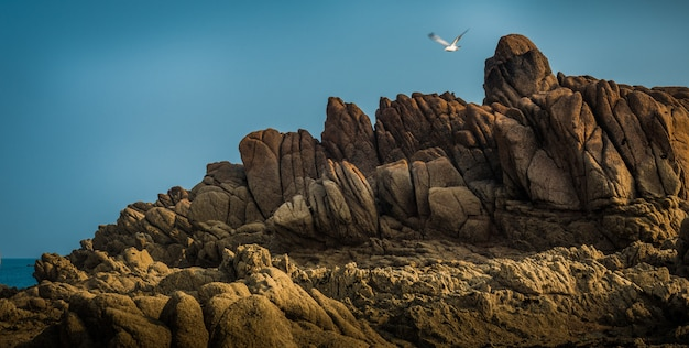 Beautiful view of the magnificent rocky cliffs by the sea and a sea bird flying Free Photo