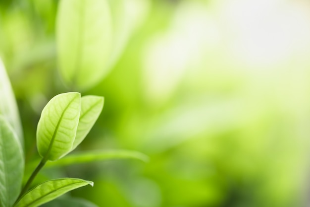 Beautiful view of nature green leaves on blurred greenery tree background with sunlight Premium Photo