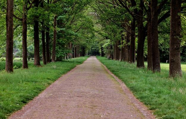 공원에서 푸른 나무로 둘러싸인 경로의 아름다운 전망 무료 사진
