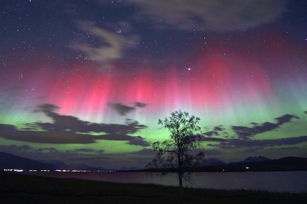 하늘에서 화려한 오로라 아래 호수 옆 나무의 아름다운 전망 무료 사진