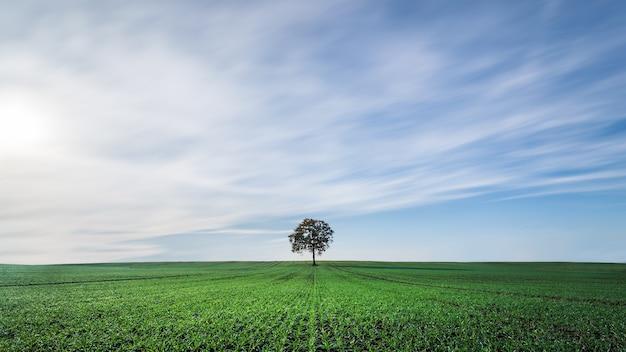 북부 독일의 필드 한가운데에있는 나무의 아름다운 전망 무료 사진