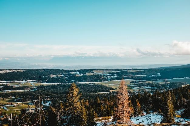 Прекрасный вид на сосны на заснеженном холме с огромным полем Бесплатные Фотографии