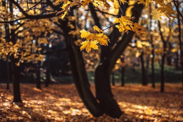 ポズナン、ポーランドでキャプチャされたフィールドに黄金の葉でいっぱいの木の美しい景色 無料写真