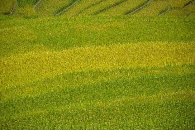 Beautiful view of rice terrace in mu cang chai, vietnam, farmer implant on high mountain. Premium Photo