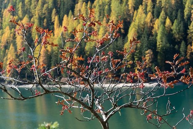 Bella vista di un albero con foglie rosse, un lago e una foresta Foto Gratuite
