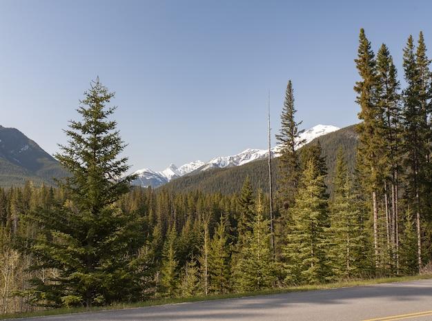 Bella vista sugli alberi e sulle montagne rocciose sullo sfondo in canada Foto Gratuite