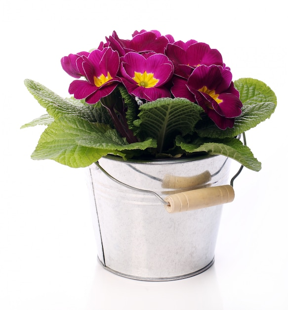 Beautiful violet flowers Free Photo
