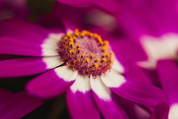 Beautiful violet fresh flower Free Photo