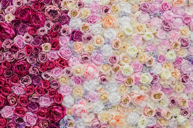 Beautiful wall of pink and red roses Free Photo