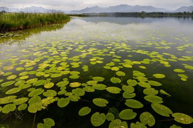 山々を背景に池に浮かぶ美しい睡蓮の葉 無料写真