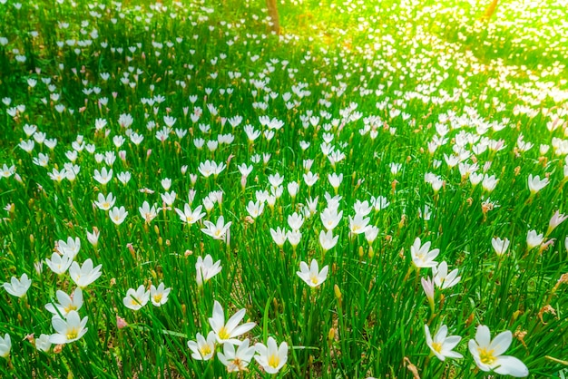 Beautiful white bunch flowers on green grass background photo free beautiful white bunch flowers on green grass background free photo mightylinksfo