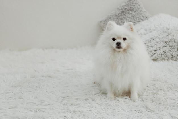 Красивая белая собака, сидящая на кровати с копией пространства Бесплатные Фотографии