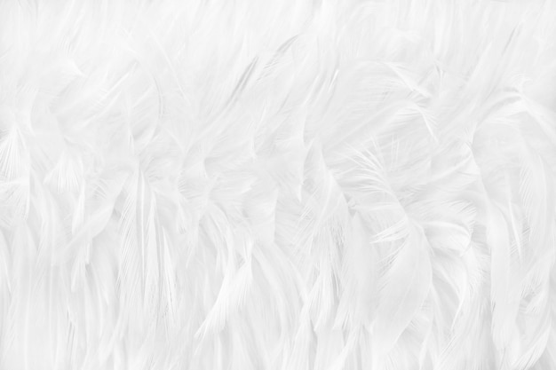 Beautiful white feathers texture background. Premium Photo