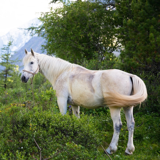 Beautiful white horse in the forest. Premium Photo