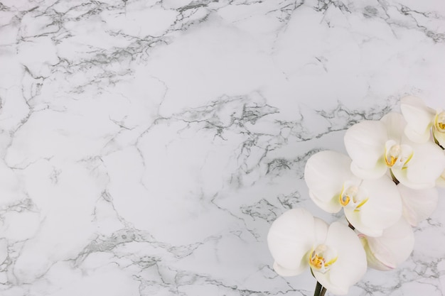 Beautiful white orchid branch on marble textured background Free Photo
