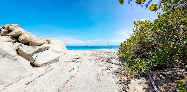 Beautiful wild caribbean beach landscape at tayrona, colombia Premium Photo
