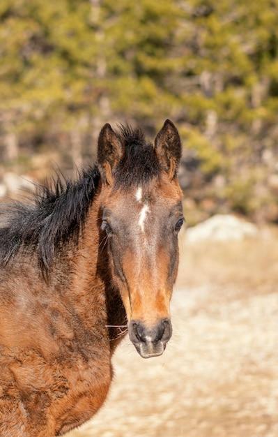 Bellissimo cavallo selvaggio nella foresta Foto Gratuite