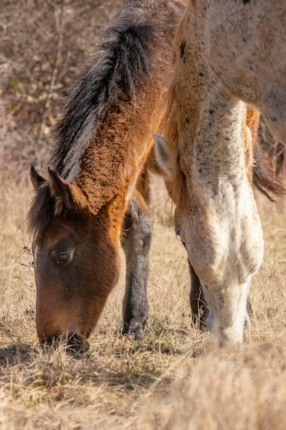 森の中の美しい野生の馬 無料写真