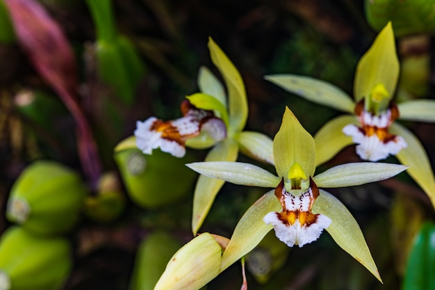 Beautiful wild orchid in tropical forest. Premium Photo